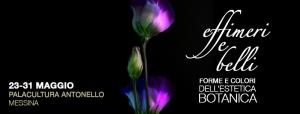 """Messina - Mercoledì 23 maggio alle ore 16.30 sarà inaugurata presso il Palacultura Antonello la mostra  """"Effimeri & belli - forme e colori  dell'estetica botanica"""" del Liceo """"Seguenza""""."""