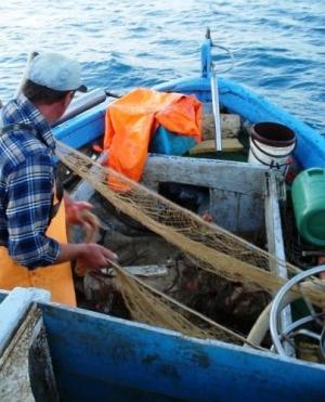 Coronavirus: Spinella (UNICOOP SICILIA):  Regione attivi il Fondo di solidarietà il comparto pesca, fermo da due mesi