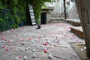 Barcellona Pozzo di Gotto: il 25 luglio all'Epicentro la premiazione della X edizione della Poesia Circolare